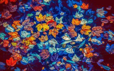 Comment se préparer à l'automne, selon l'Ayurveda ?